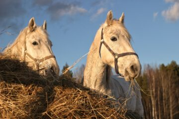 white horse on brown dried grass field during daytime